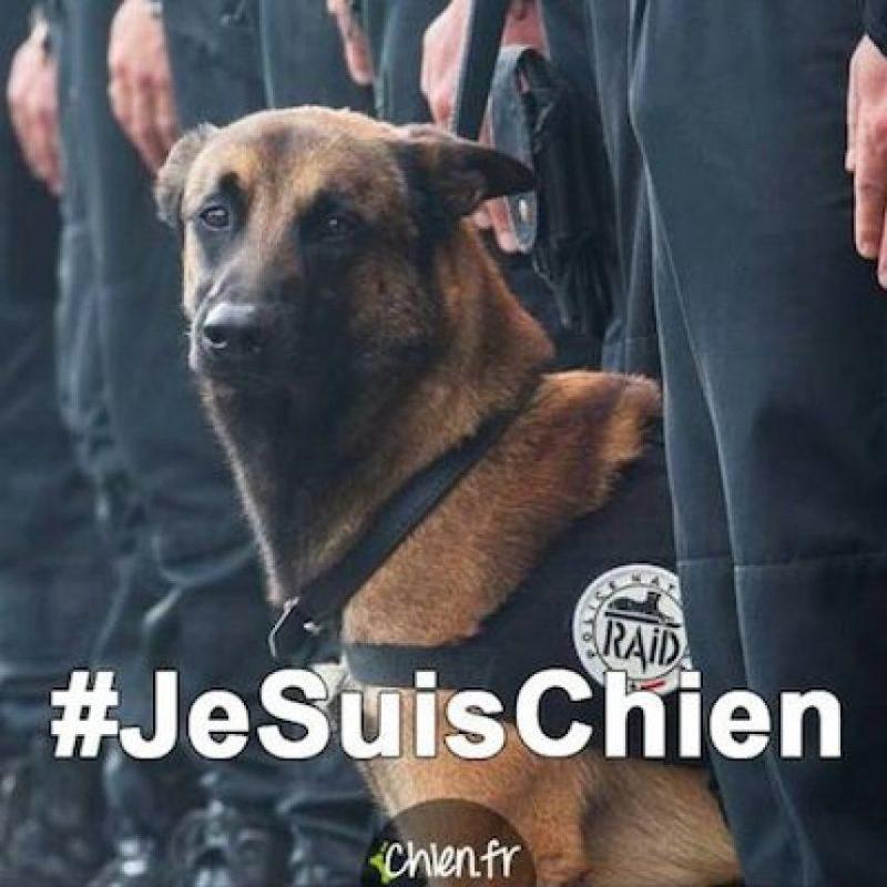 """#JeSuisChien (Yo soy perro), los tributos a """"Diesel""""; perra policía que murió este día Foto: Instagram.com/kuatrech"""