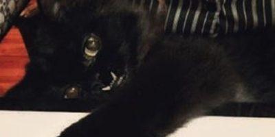 Fotos: Ella es Princess Monster Truck, la gata más aterradora que conquistó Internet