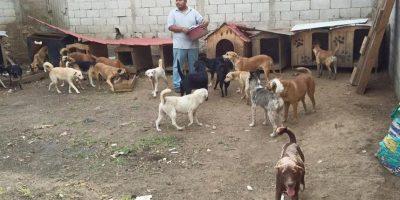 Vecinos se quejan por refugio de perros y ahora serán desalojados