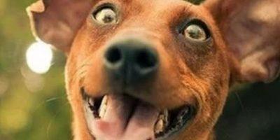 Estos perros fueron captados en momentos muy particulares Foto:Vía Youtube
