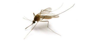 Recuerdan que a nivel individual, los repelentes de mosquitos son ampliamente utilizados para evitar la exposición a la enfermedad. Foto:Getty Images