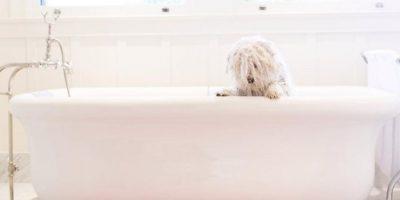 Después de un merecido baño. Foto:facebook.com/beast.the.dog