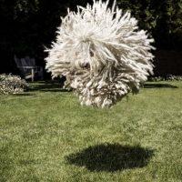 Parece flotar en el aire. Foto:facebook.com/zuck