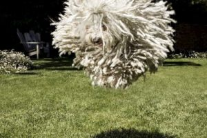 Nadie se salva, ni el perrito de Mark Zuckerberg Foto:Imgur / Reddit