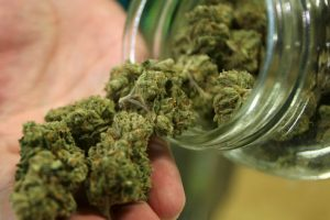 Marihuana. Foto:Getty Images