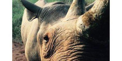 Príncipe Harry conmueve a redes sociales por su visita a animales víctimas de cacería
