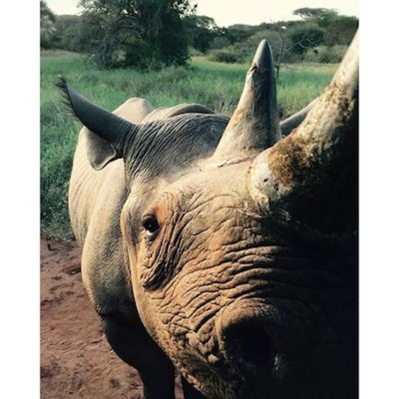Zawadi, una rinoceronte hembra que ha conocido a los hermanos de la realeza británica: Harry y William Foto:Instagram.com/KensingtonRoyal