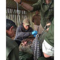 El príncipe participó en la operación para salvar la vida de un rinoceronte al que cazadores le arrancaron el cuerno Foto:Instagram.com/KensingtonRoyal