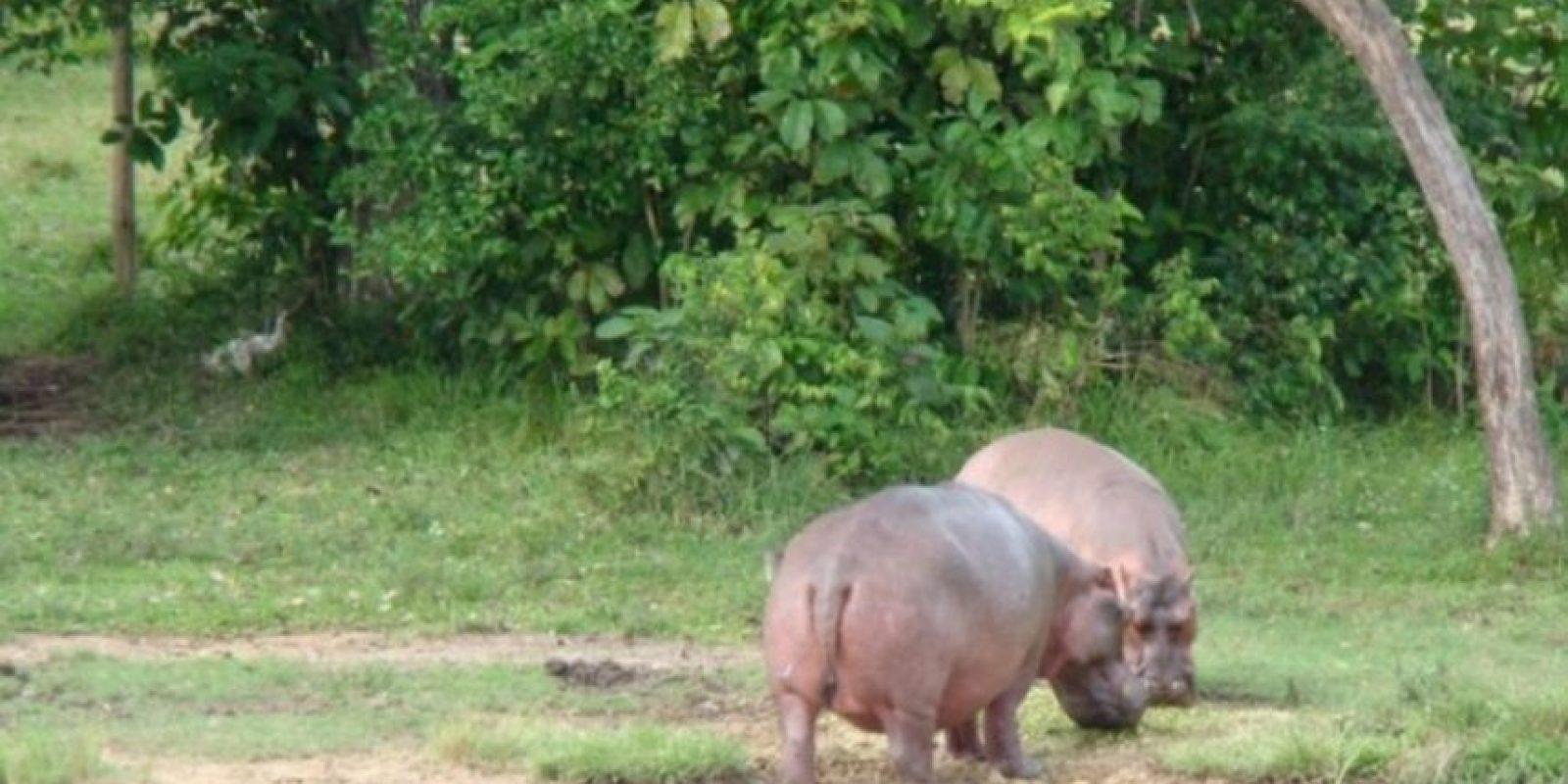 Foto:haciendanapoles.com