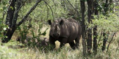 Por eso pidió apoyar a las organizaciones que buscan impedir la caza Foto:Twitter.com/KensingtonRoyal