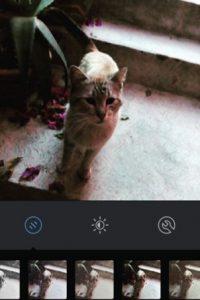 Juno Foto:Instagram