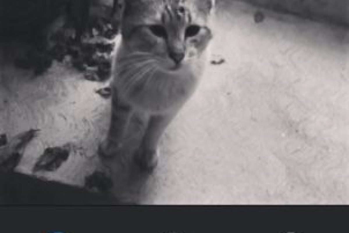Willow Foto:Instagram