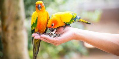¿Qué animales silvestres debes registrar y cómo hacerlo?