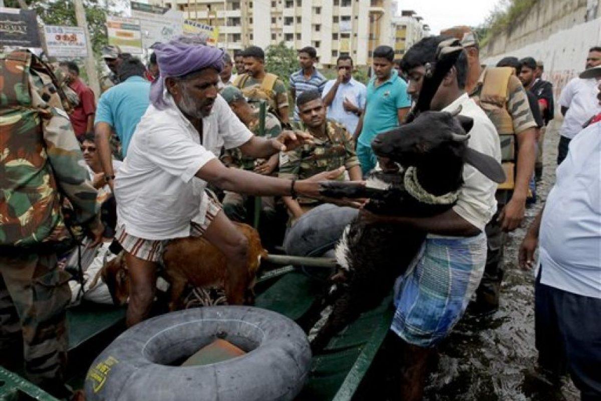 Incluyendo a sus animales. Foto:AP