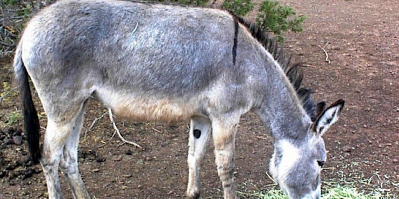 El animal duró 2 días con ellos. Foto:Vía Wikipedia.org
