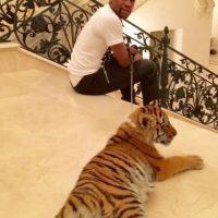 A Mayweather le regalaron un tigre de dos meses Foto:Vía instagram.com/floydmayweather