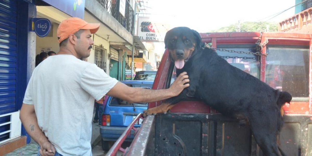 """La historia de Rocky, el perro """"condenado"""" a morir por inyección letal"""