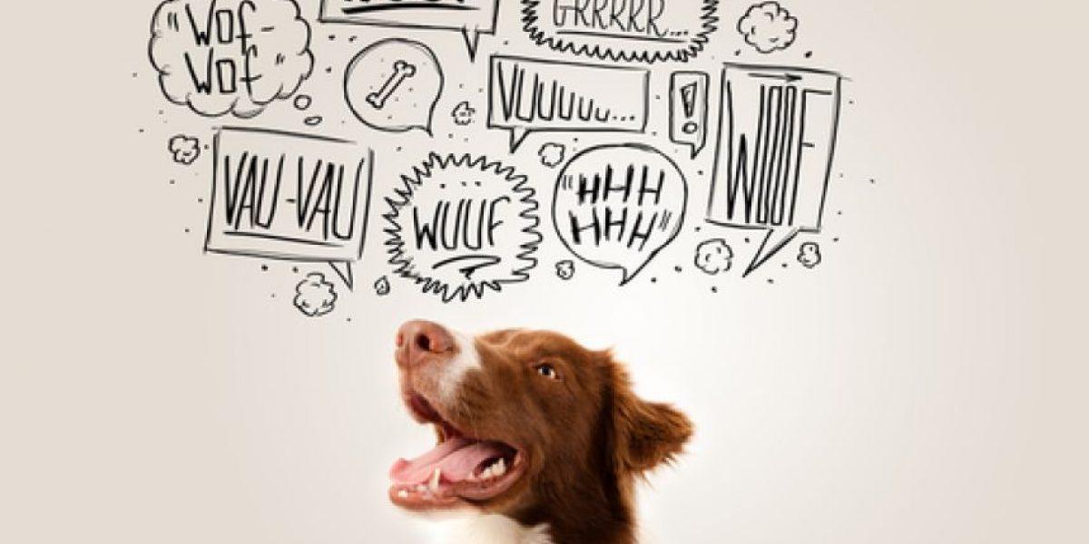 Crean en EE.UU. un servicio de asesoramiento veterinario en línea