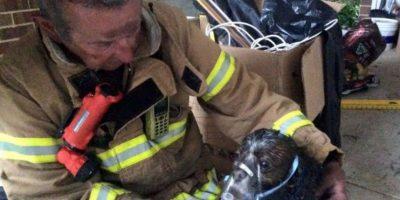 Cuando controlaron el fuego, pudieron encontrar al cachorro. Foto:Vía facebook.com/Melbourne.MFB