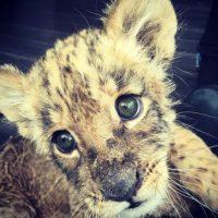 """""""Black Jaguar-White Tiger"""" surgió en 2013. Foto:vía instagram.com/blackjaguarwhitetiger"""