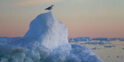 """Según la ONU, """"en el siglo XIX, empezó a tomarse conciencia de que el dioxido de carbono que se acumulaba en la atmósfera terrestre podía crear un «efecto invernadero» y aumentar la temperatura del planeta"""". Foto:Getty Images"""