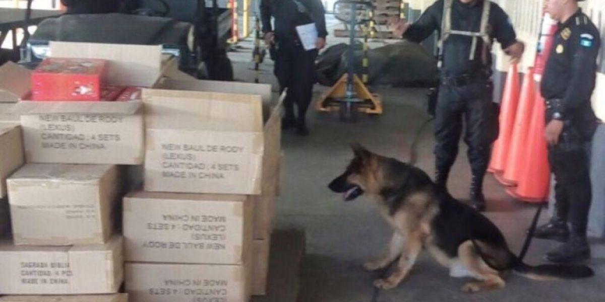 Fallece canino de Gobernación que ayudaba a detectar droga