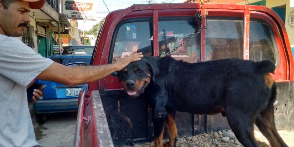Un amparo retrasa la muerte por inyección del perro Rocky