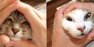 También aplica para gatos Foto:Vía Twitter/#riceball