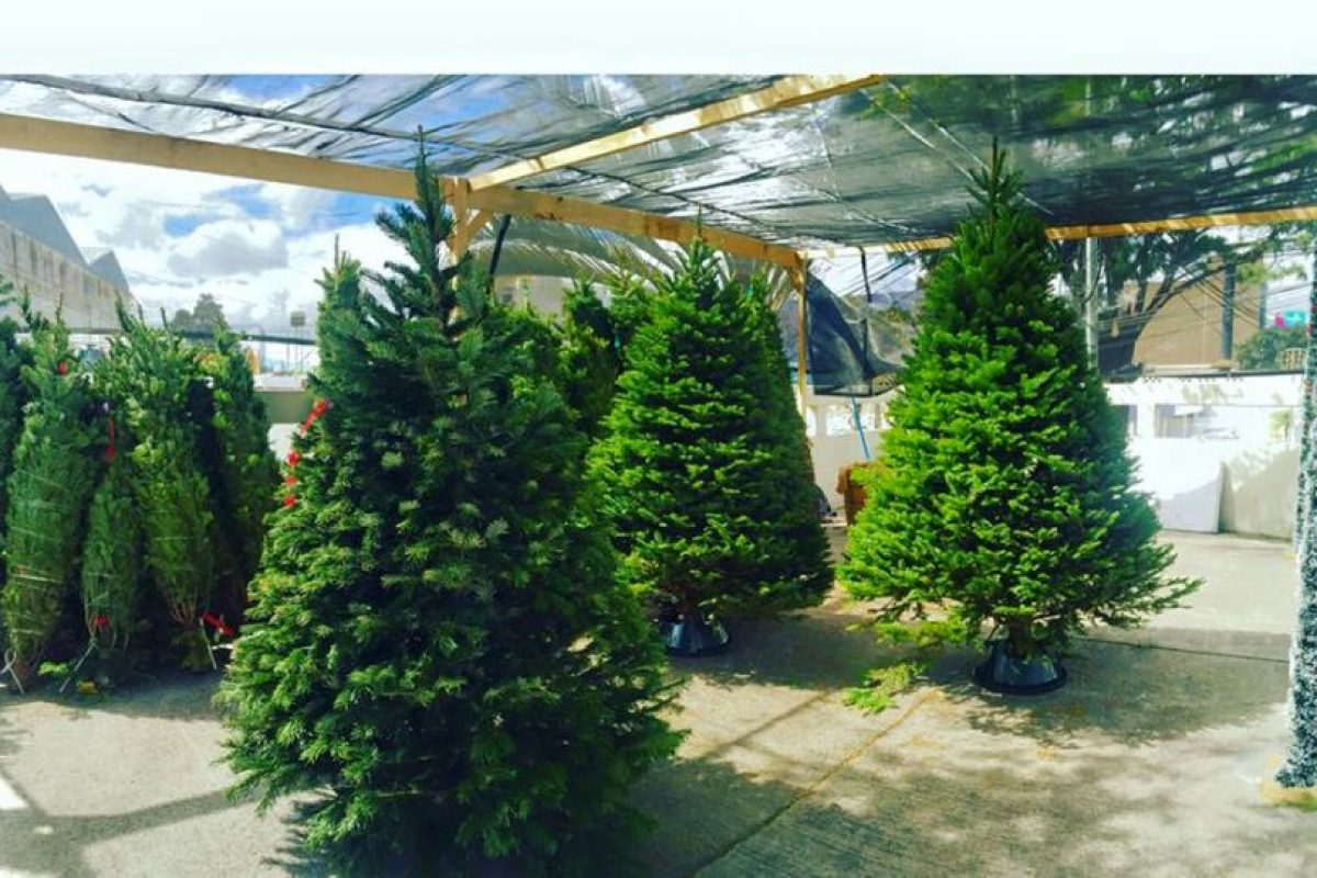 Foto: Facebook: Evergreen Christmas Trees