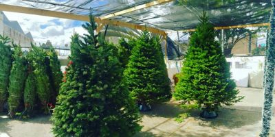"""¡Apoya y decora! Arbolitos navideños para ayudar a los niños de la Fundación """"Javier Alejos"""""""