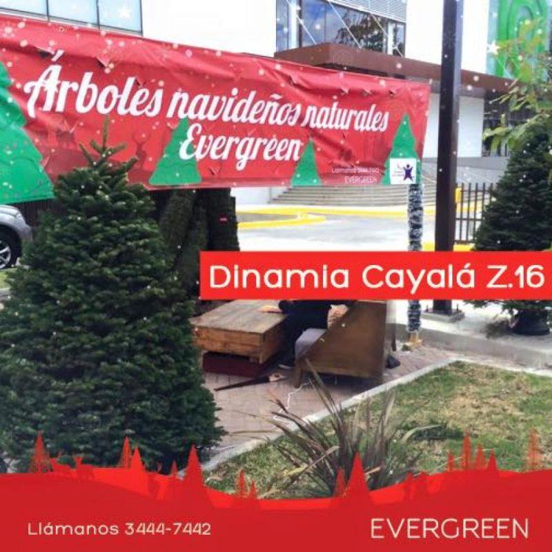 Foto:Facebook: Evergreen Christmas Trees
