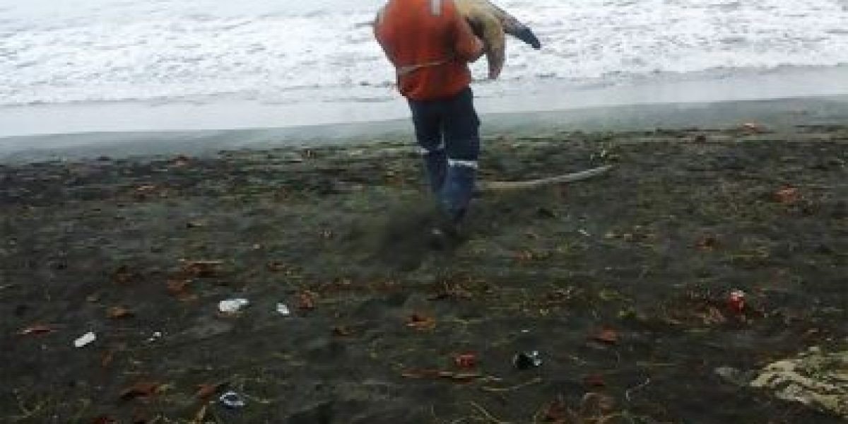 Hombre compra tortugas en el mercado para liberarlas en el mar