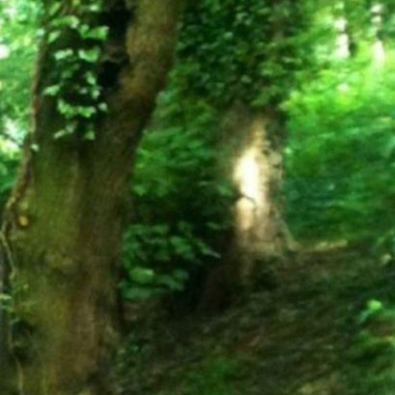 La persona que fotografío este árbol, asegura que se trata de la figura de un niño. Foto:Birminghamhistory