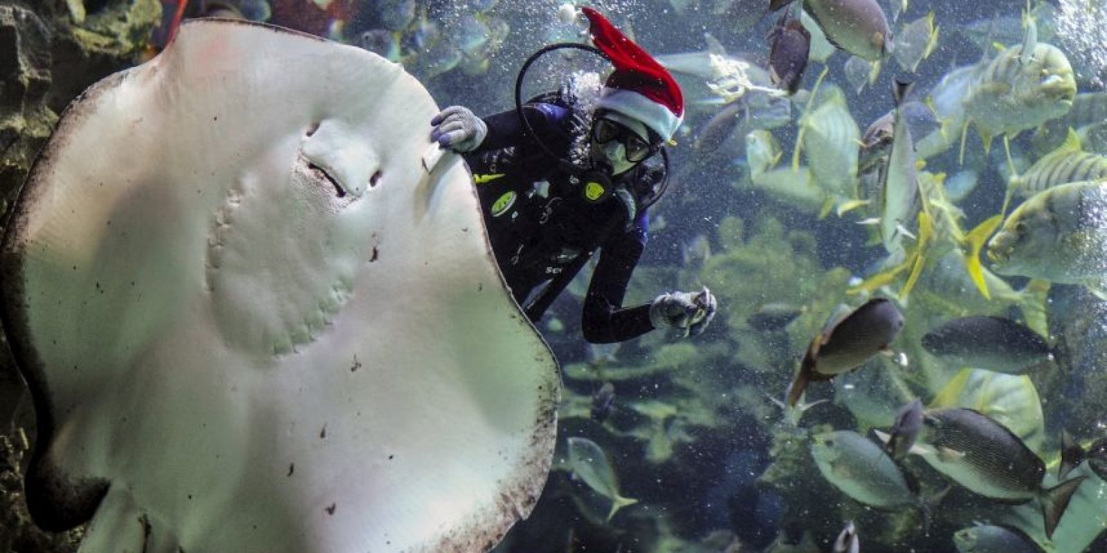 Buzo en Malasia. Foto:AFP