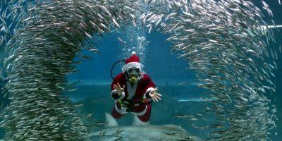 Buzo vestido de Santa Claus en Corea del Norte. Foto:AFP