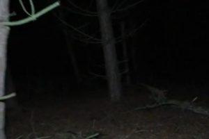 """7. El grupo de investigadores de """"Haunted Finders TV"""" asegura haber capturado una imagen de video donde se observa la presencia de """"un ente extraño"""". Foto:Via Hunted Finders"""