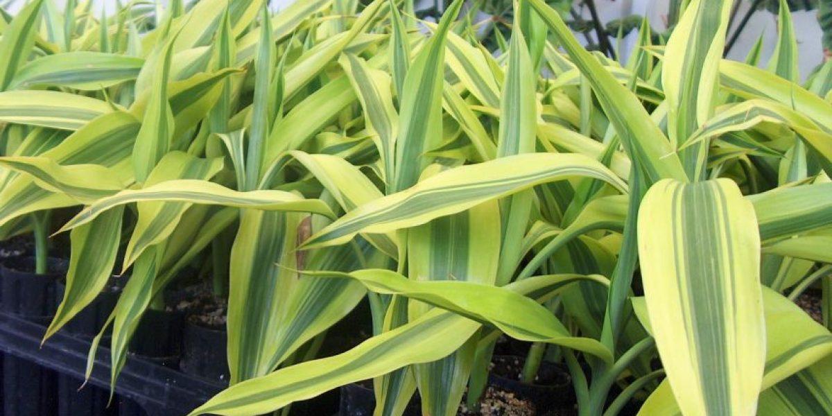La exportación de plantas ornamentales crece 14.9% y te decimos los motivos