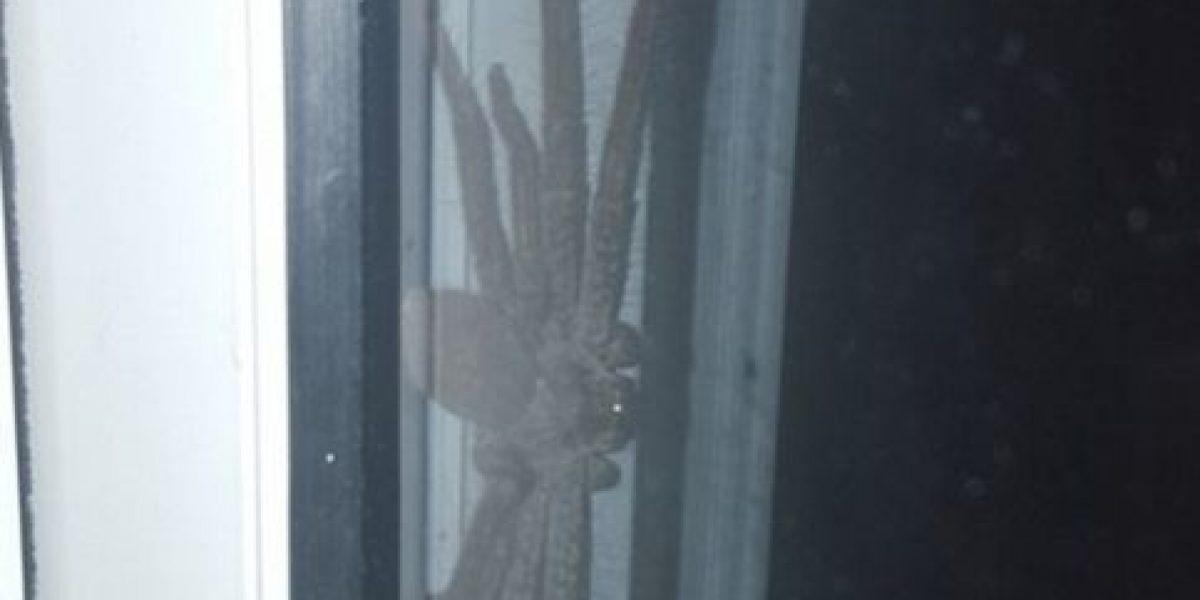 Horripilante imagen de araña aterroriza Internet