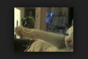 Aquí otra silueta extraña cerca del gato. Foto:Vía Reddit