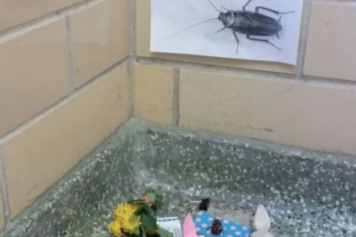 """Por la tarde, alguien colocó el """"retrato"""" de la cucaracha. Foto:Vía Imgur"""