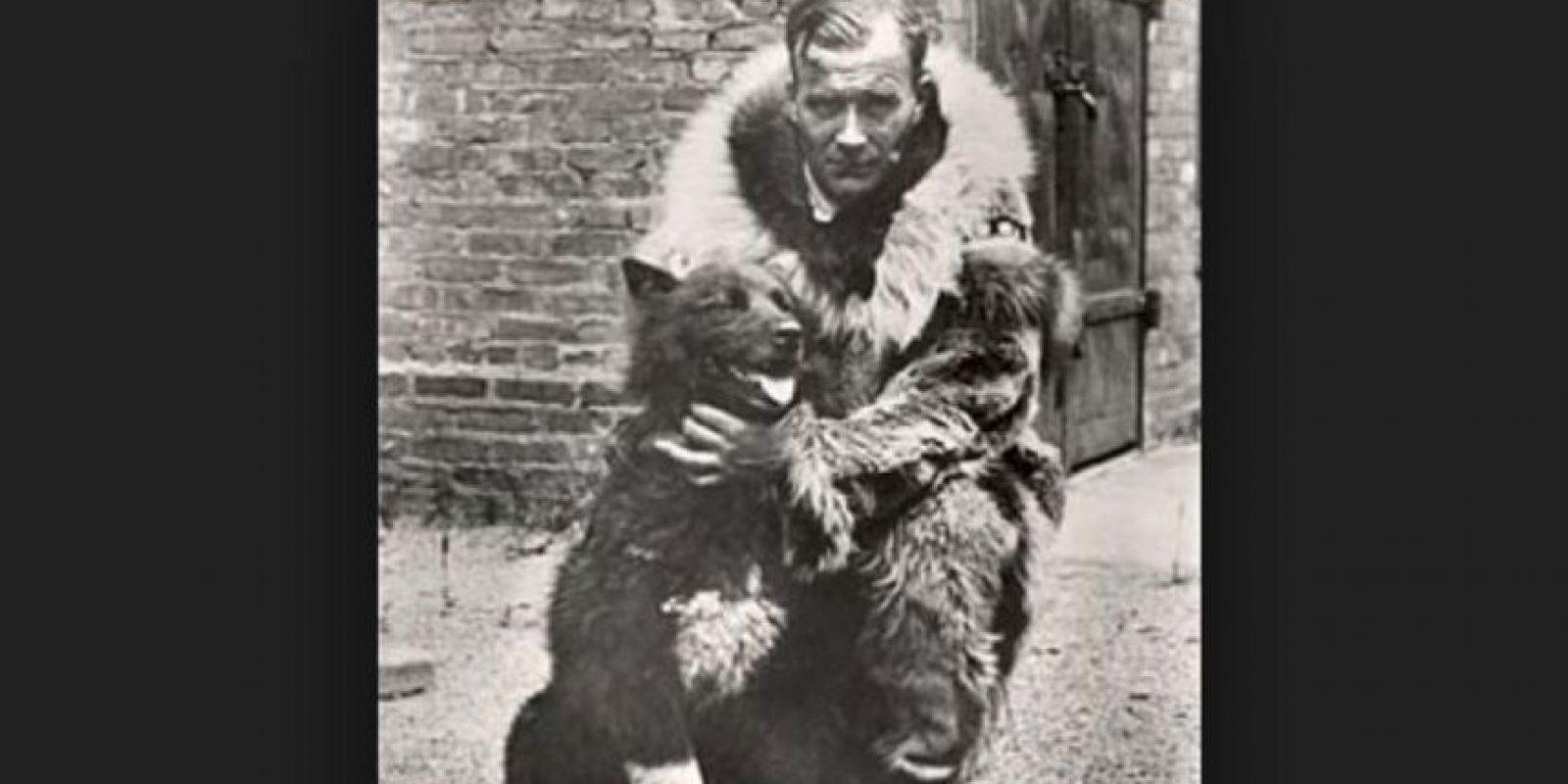 Al lastimarse el perro guía, Balto fue el único capaz de guiar el trineo para llevar los medicamentos hasta los hospitales del pueblo, convirtiéndose en el perro-héroe de Alaska. Foto:Foto: Vía Wikimedia.org