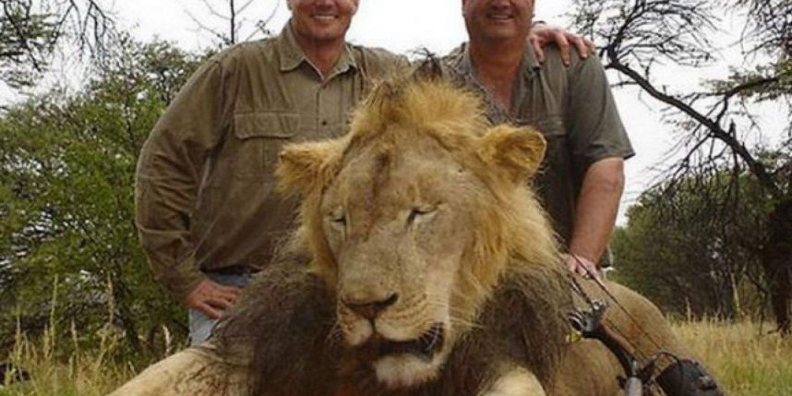 Aplicando una nueva ley que complique a los cazadores introducir al país una cabeza o piel de león. Foto:Facebook Archivo