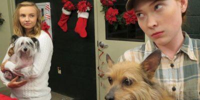 Un adolescente problemático descubre que el refugio de mascotas donde hace servicio comunitario cerrará y tiene solo 12 días para encontrar un hogar para cada perro. Foto:vía Netflix