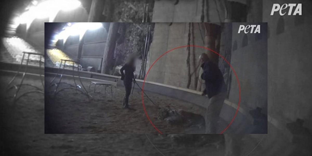 VIDEO. Imágenes de despiadados métodos de famoso entrenador causan indignación