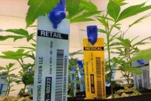 El 10 de diciembre de 2013 se aprobó una ley que regula el mercado de esta planta, la producción (que será controlada por el Estado), la comercialización, la tenencia y los usos recreativos y medicinales de la marihuana, así como también las utilizaciones con fines industriales. Foto:Getty Images