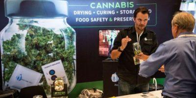 Se tolera el consumo de cannabis de forma personal, pero no la producción ni la venta de la misma. Foto:Getty Images