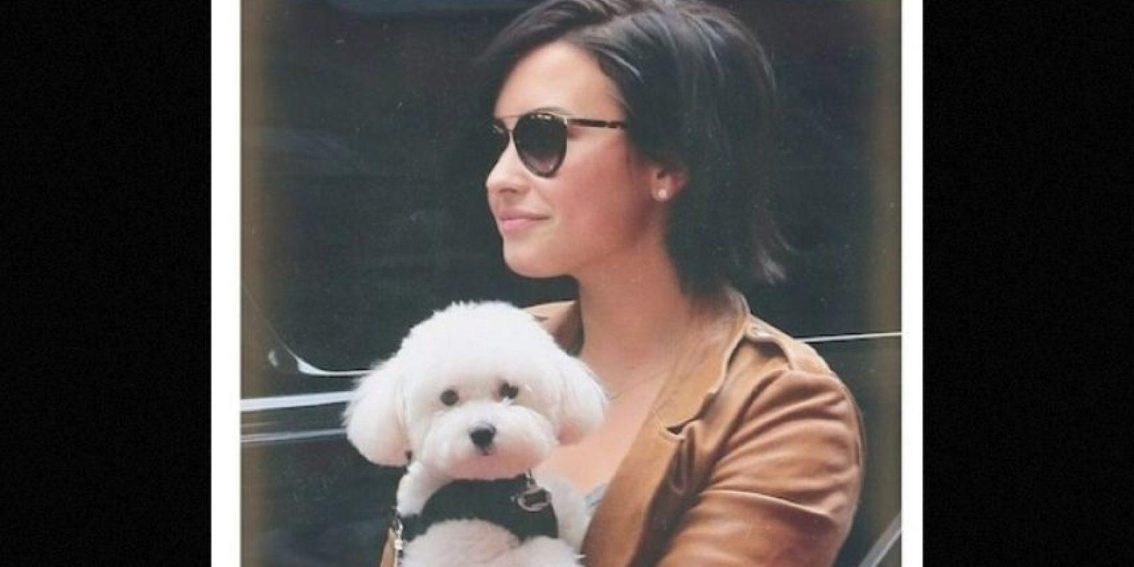 Este año, Demi Lovato también se despidió de Buddy, quien murió en un trágico accidente. Foto:Instagram/ddlovato