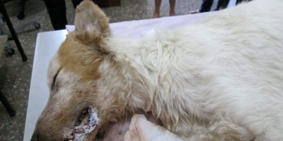 Cachorro que murió por una bomba que pusieron en su trompa provoca gran indignación
