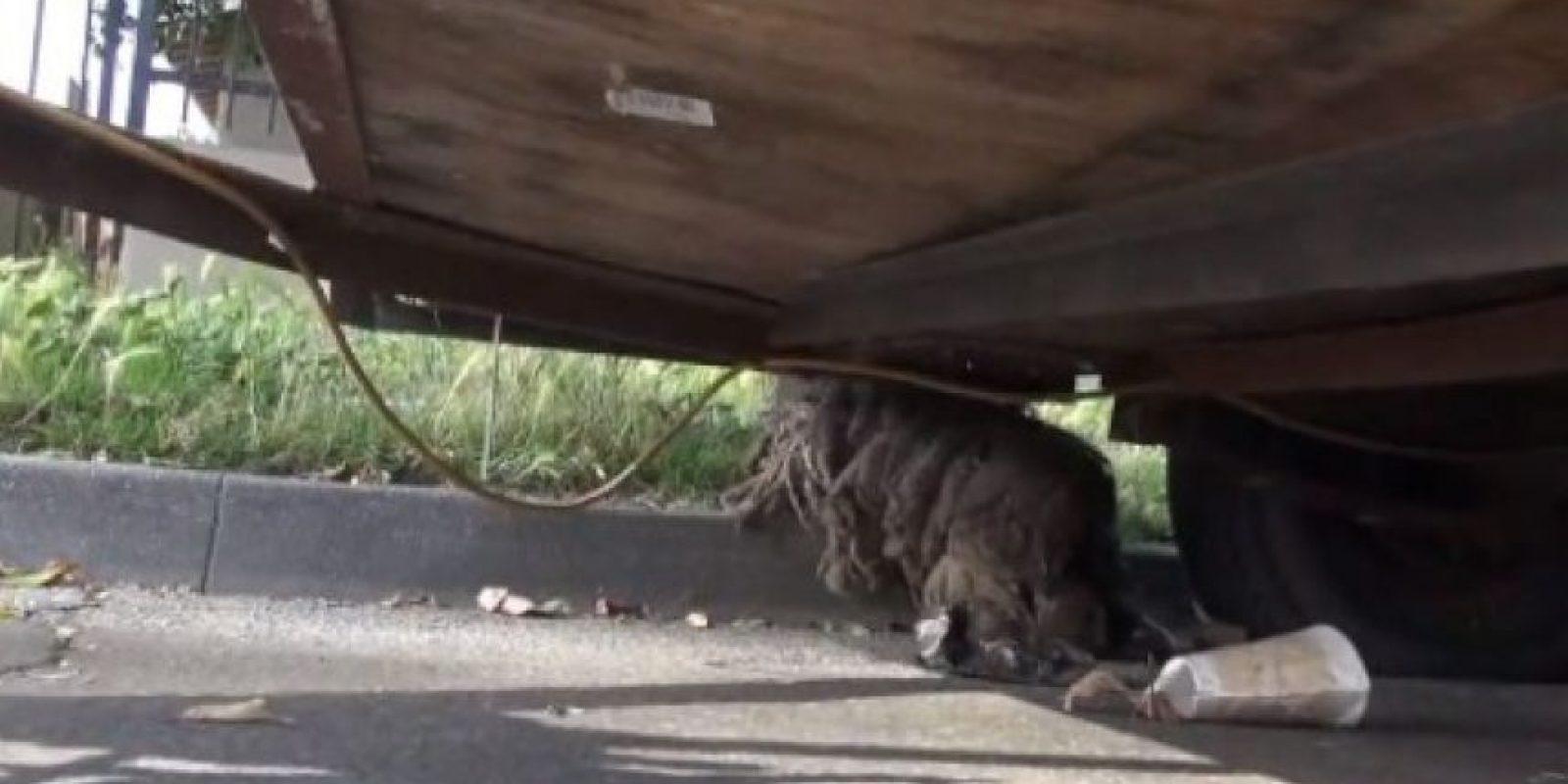 La historia de este perro abandonado les conmoverá. Foto:Hope for Paws