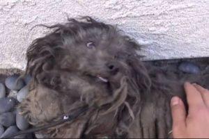 Se llama Theo y fue rescatado a principios de mayo de 2014 por la organización Hope For Paws. Foto:Hope for Paws